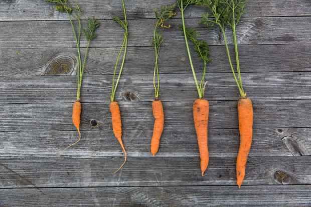 carrots food food photography fresh